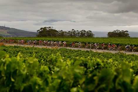 Racing through the winelands outside Stellenbosch in Die Burger Cycle Tour.